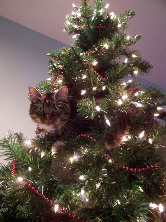 22-cats_in_christmas_trees