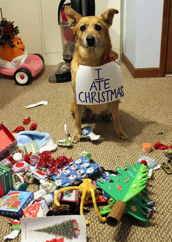 22-merry_christmas_pets