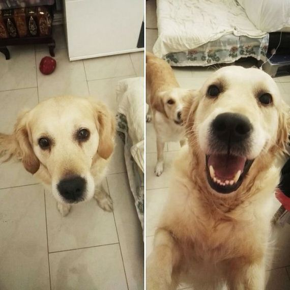 22-pets-before-and-after-being-called-a-good-boy