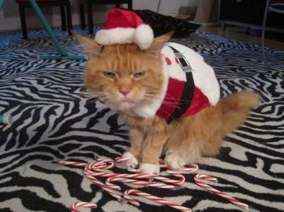 24-merry_christmas_pets