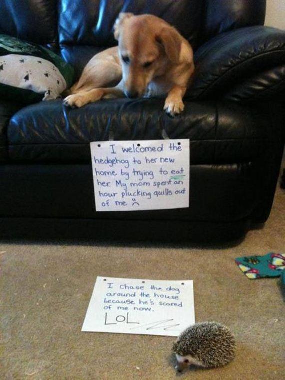24-shaming_pics