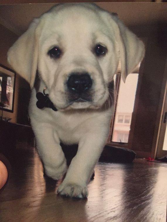 26-puppies-make-me-happy