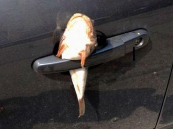 27-parking-revenge