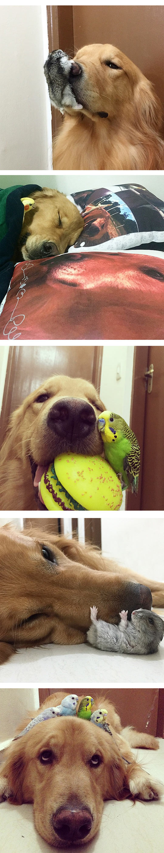 2funny-bob-dog-bird-friends