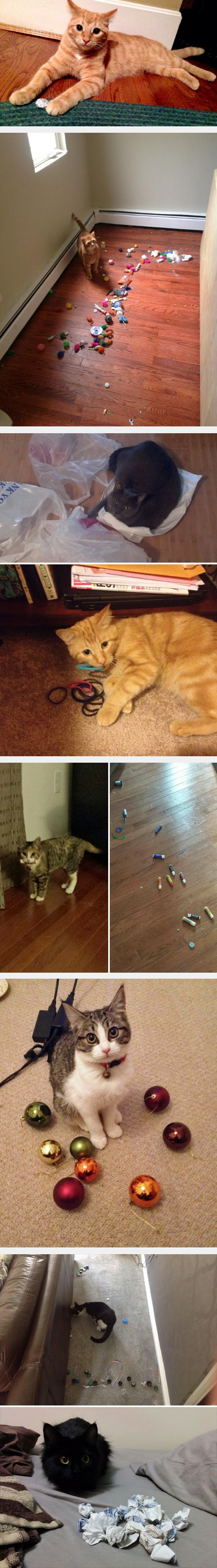 2funny-cat-hoarding-things-issues-christmas-balls