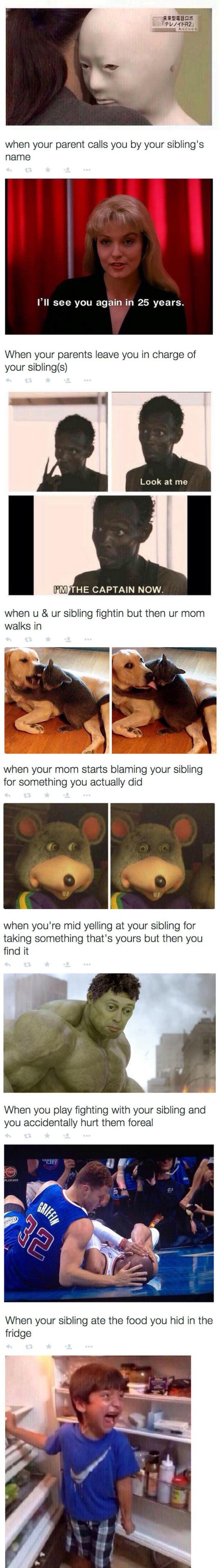 2funny-dog-sibling-behave-fights-parents
