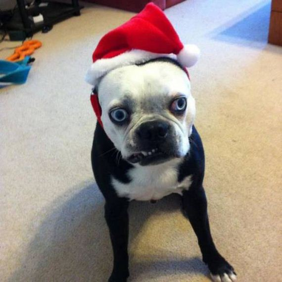 31-merry_christmas_pets