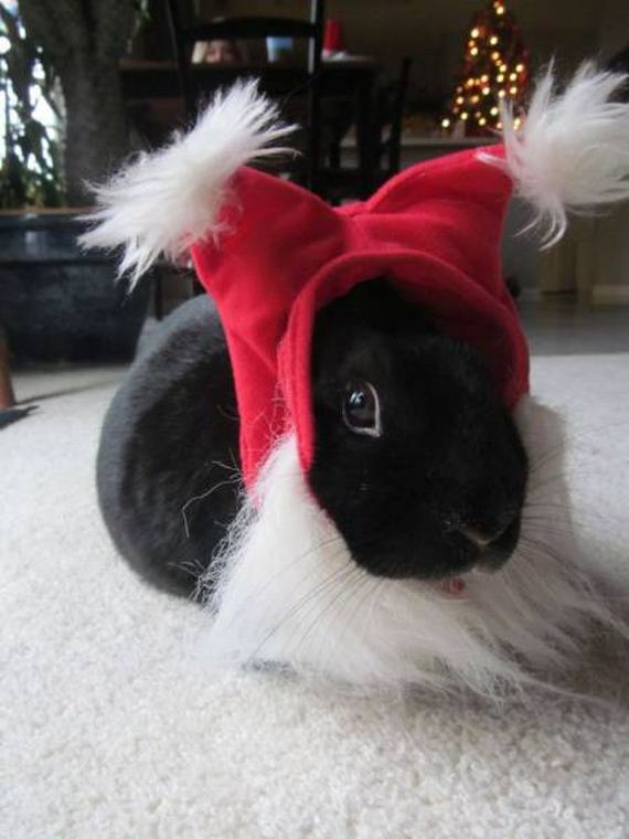 38-merry_christmas_pets