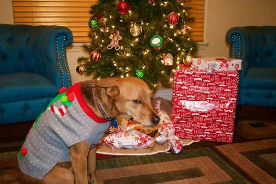 43-merry_christmas_pets