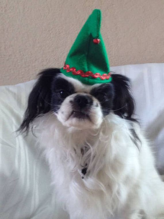 46-merry_christmas_pets