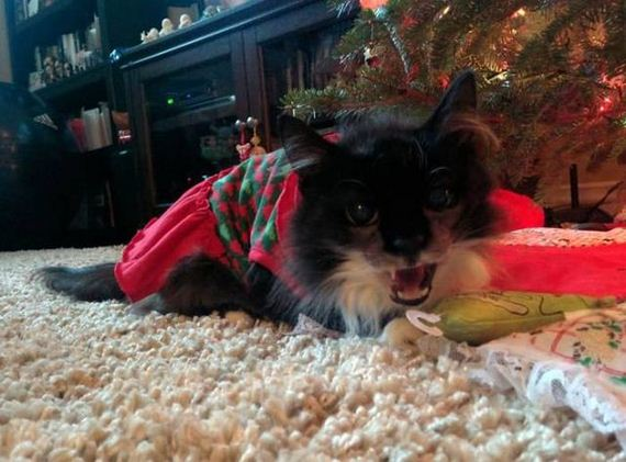 47-merry_christmas_pets