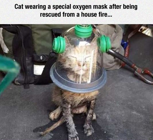 cool-cat-wearing-mask-head