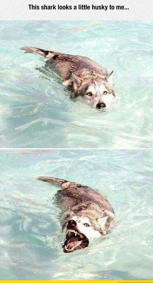 cool-dog-water-shark-teeth-scary