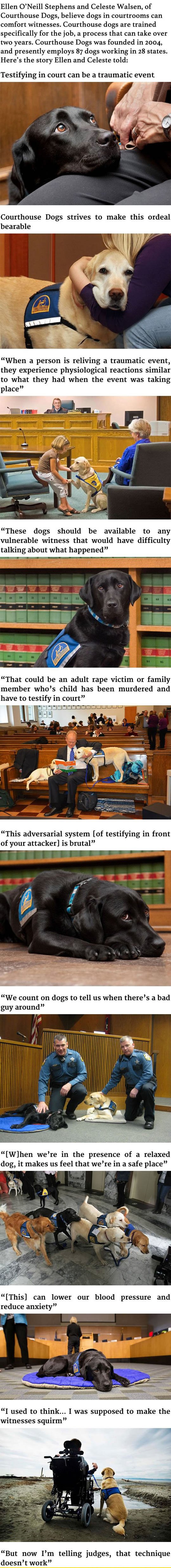 cool-dogs-helping-witnesses-court