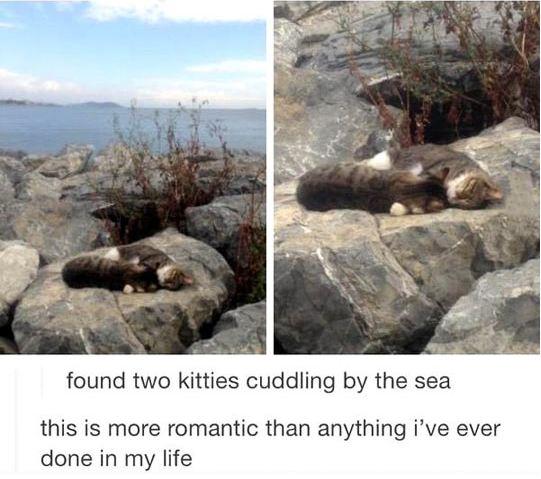 cute-cats-cuddling-rocks-sea
