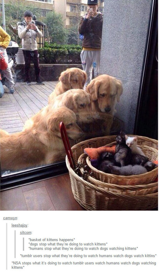 cute-dogs-looking-kitten-basket-glass