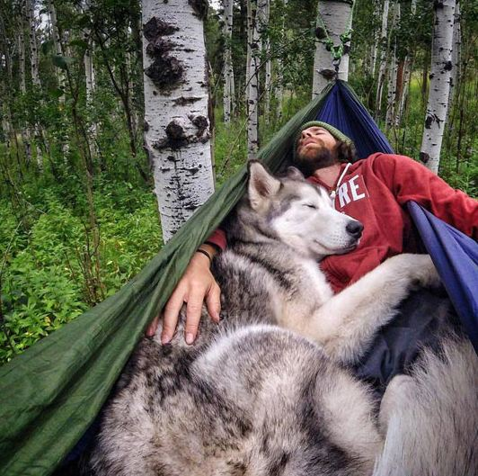 cute-husky-sleeping-hammock-nature