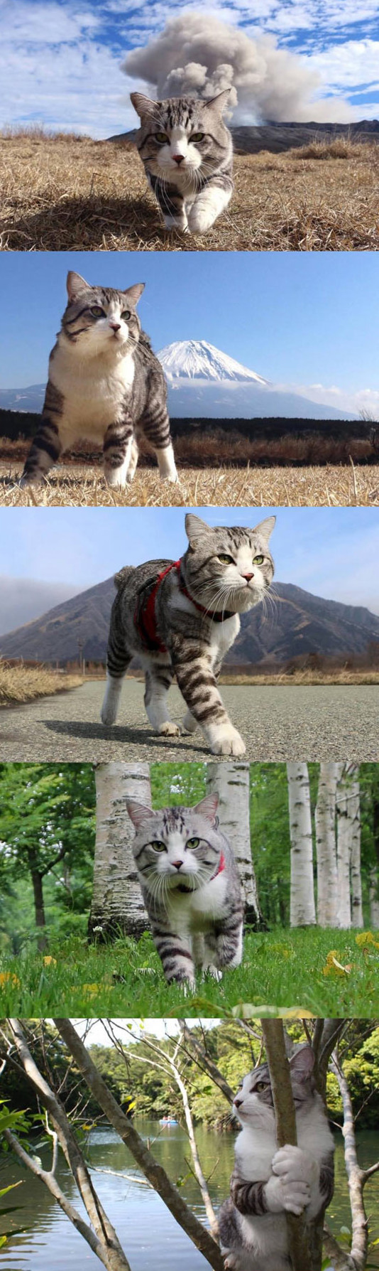 cute-kitten-walking-mountain-volcano