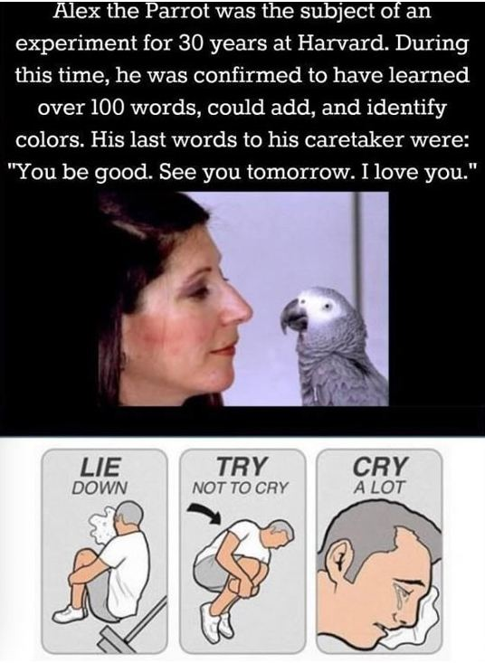 cute-parrot-smart-alex-death