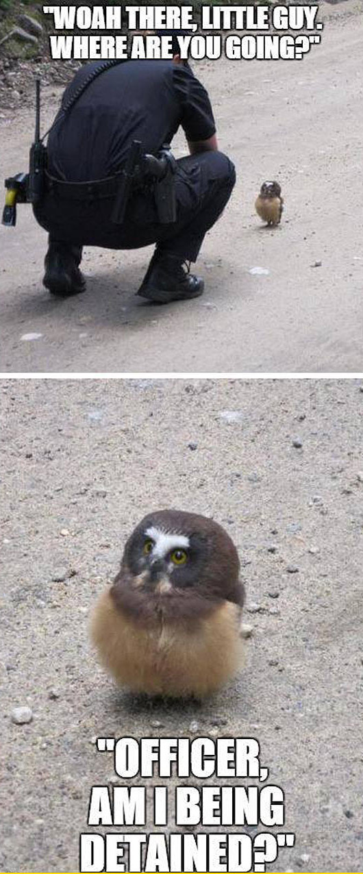 funny-baby-owl-road-curious