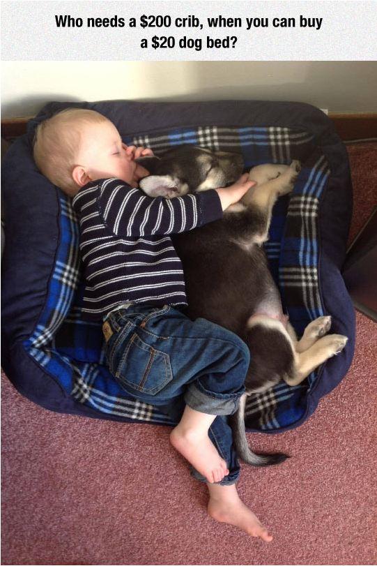 funny-baby-sleeping-dog-bed