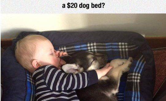 funny-baby-sleeping-dog-bed0