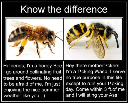 funny-bee-wasp-scary-bugs