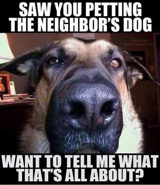 funny-big-dog-nose-face
