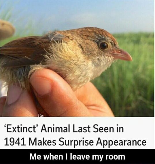 funny-bird-big-eyes-extinct