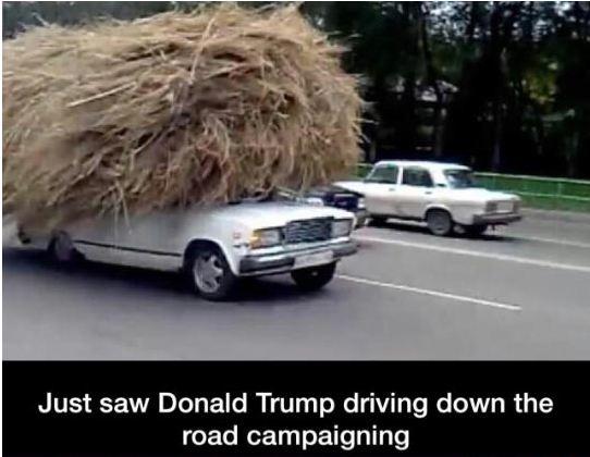 funny-car-wig-donald-trump