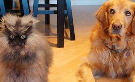 funny-cat-meow-dog-faceswap0