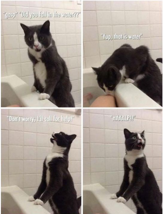 funny-cat-bath-call-water