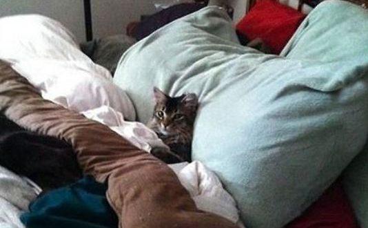 funny-cat-bed-human-sleeping