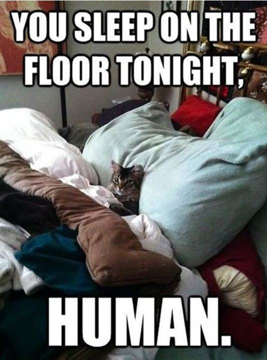 funny-cat-bed-human-sleeping