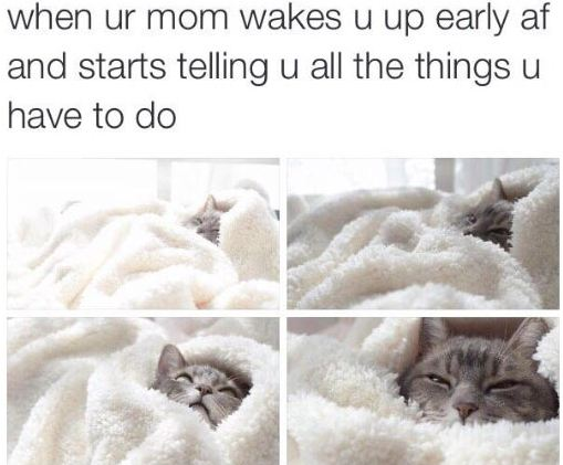 funny-cat-bed-morning-mother