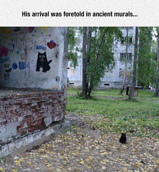 funny-cat-cute-small-graffiti