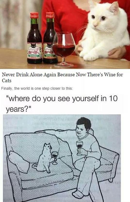 funny-cat-drinking-wine-sofa