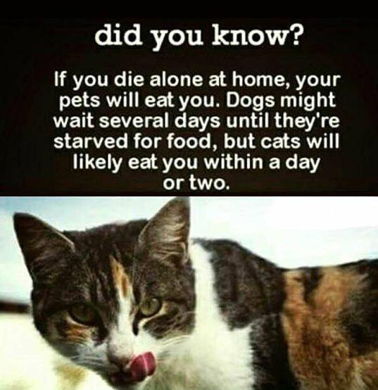 funny-cat-eat-human-fact