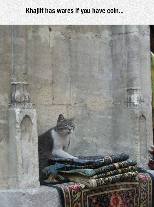 funny-cat-rug-selling-street-old-man