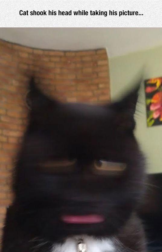 funny-cat-shaking-head-drill