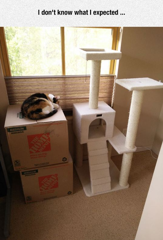 funny-cat-sleeping-cardboard-box