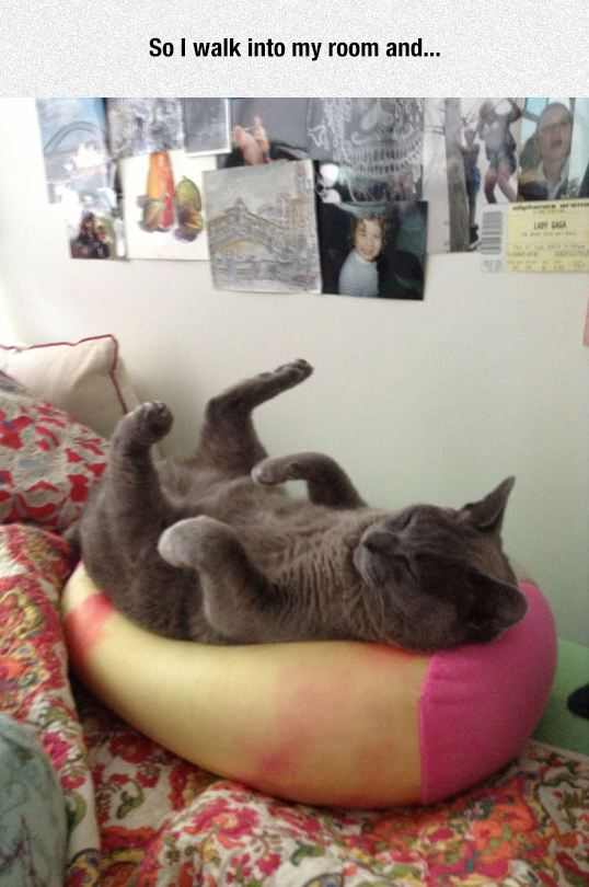funny-cat-sleeping-upside-down