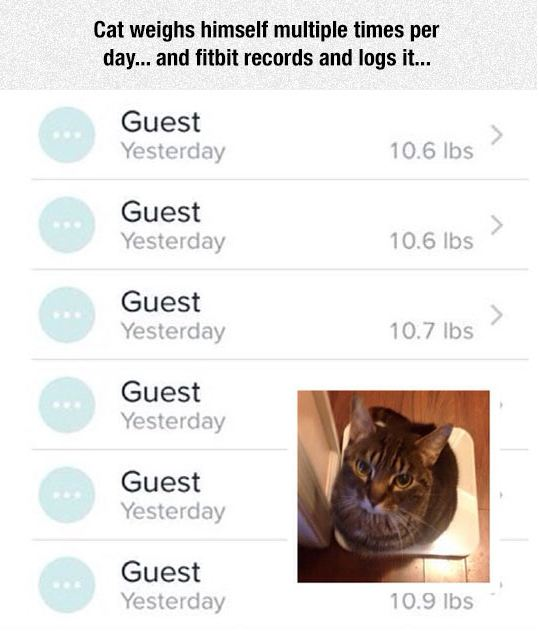 funny-cat-weight-app-fitbit