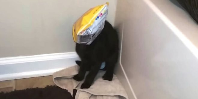 funny-cats-getting-stuck