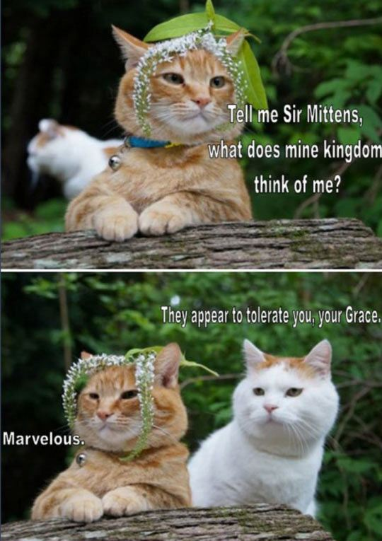 funny-cats-sir-king-tolerate