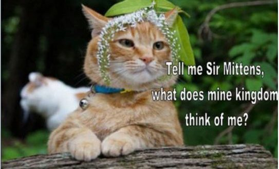funny-cats-sir-king-tolerate0