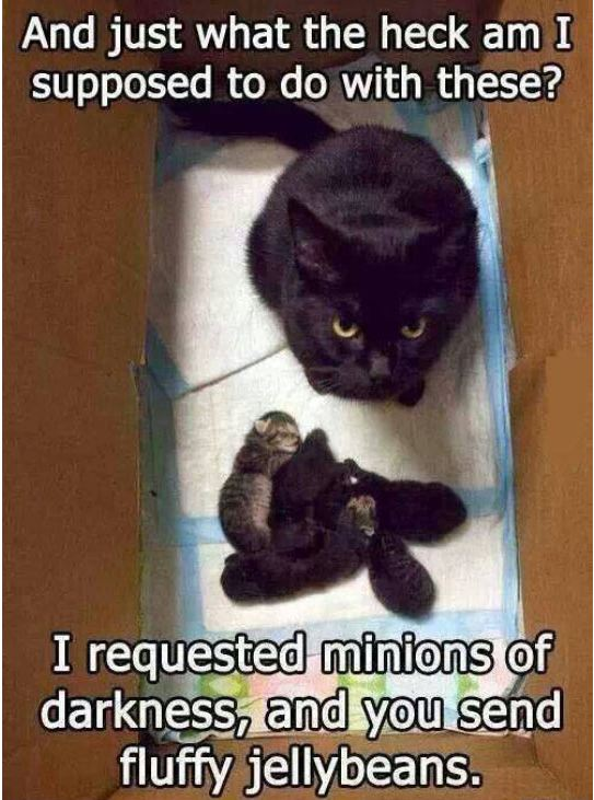 funny-cay-box-minions-kitties