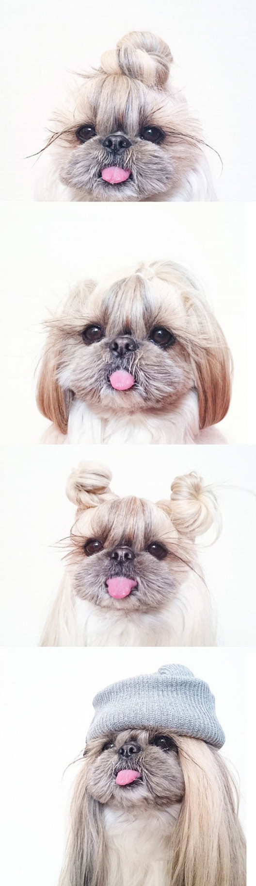 funny-dog-hairstyle-tail-cute