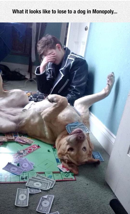 funny-dog-playing-monopoly-happy