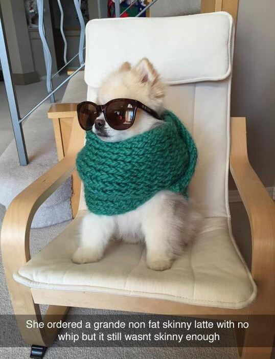 funny-dog-scarf-glasses-sofa